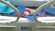Pequenos, rosados e idênticos: nascem pandas gêmeos em Madri