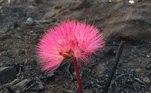 Assim como as flores que, timidamente, começam a ressurgir, devolvendo à planície uma diversidade inigualável de coresLeia mais:As imagens da luta dos animais pela vida no Pantanal em chamas