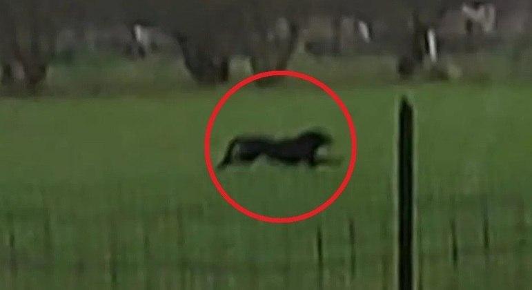 """Animal foi visto correndo """"assustado"""" e """"confuso"""" por região rural"""