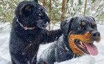 Luna e Venza tiveram que ser cuidadosamente apresentados, mas não demoraram a se tornar amigosVeja também: Saiba como ajudar os pets na pandemia