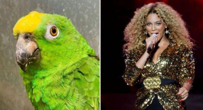 O papagaio Chico faz sucesso no Reino Unido cantando sucessos de divas pop