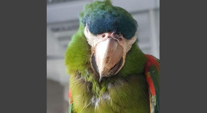 Funcionário do Metrô de SP salva papagaio após descarga elétrica em fio