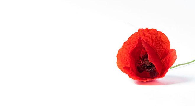 Papoula: muito além do que uma linda flor