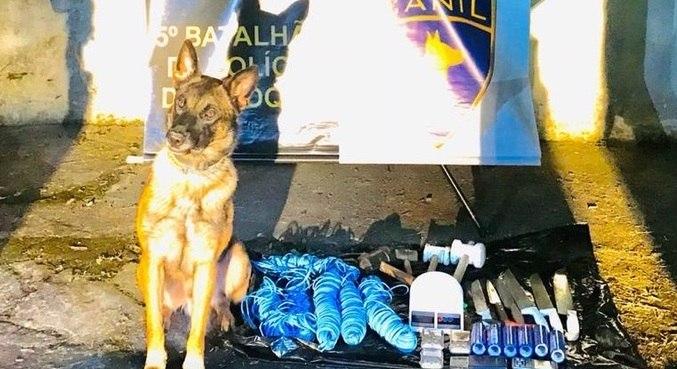Cão farejador ajudou policiais ao sentir odor em um barraco na região
