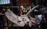 Maior esqueleto de triceratops do mundo será exibido antes de leilãoVEJA MAIS