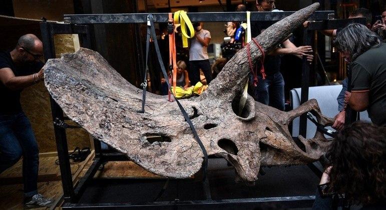 Funcionários preparam crânio de 'Big John' para a exposição em Paris