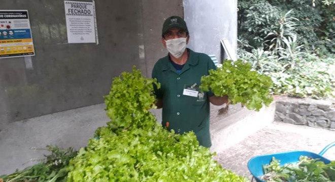 Alimentos cultivados na horta do parque serão distribuídos para a população