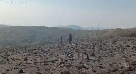 Voluntários tentam resgatar animais em área queimada