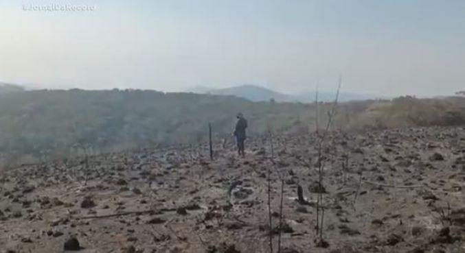 Voluntários tentam resgatar animais em área queimada no Parque Juquery (SP)