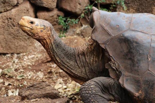 Diego foi recrutado para a missão em 1976, após ter sidoencontrado em um zoológico de San Diego, na CalifórniaVale o clique:Estátuas polêmicas viram alvos de ataques em protestosantirracistas