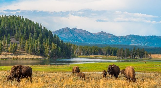 Os vírus permitem que o pasto que cresce no Parque Nacional Yellowstone possa aguentar altas temperaturas geotermais