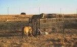 O santuário foi oficialmente fundado por Glen Garriff, em 2015, com a missão de proteger e ajudar a conservar os ameaçados leões africanos. No momento, o santuário possui 77 animais e espera mais 17 deles, saídos de um zoológico que fechou no Oriente Médio