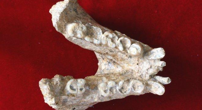 Parte da mandíbula do 'Gigantopithecus blacki': primata gigante foi extinto quando as florestas em que viviam se transformaram em savana
