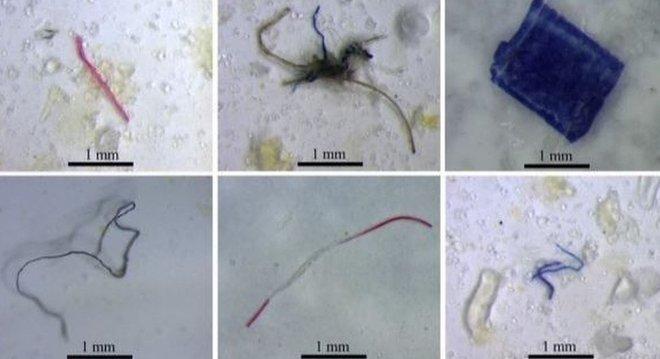 Partículas de plástico encontradas em peixes que vivem em nascentes e riachos amazônicos