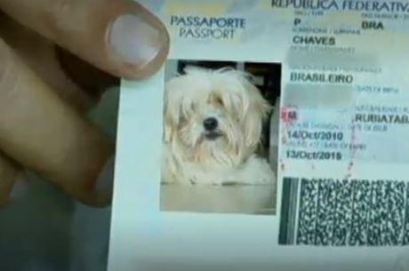 Documento pode substituir certificado veterinário