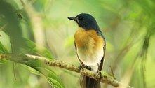 Canto dos pássaros aumenta bem-estar em humanos, diz estudo