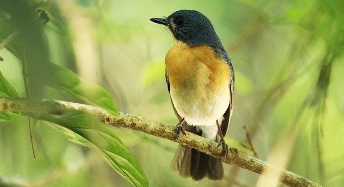 Pessoas que escutaram canto dos pássaros na trilha sentiram aumento no bem-estar