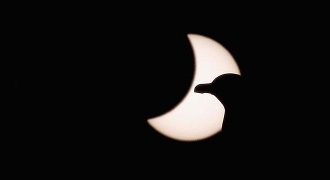 Durante os eclipses solares totais, as aves diurnas saem em busca do ninho, enquanto as noturnas entram em atividade