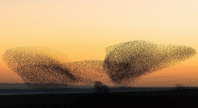 Os padrões das revoadas de pássaros são semelhantes, mas não idênticos