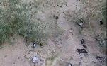 Também é possível que os pássaros estejam morrendo de fome, por precisarem migrar sem as devidas reservas de comidaMortes em massa de pássaros não são novidade no mundo. Em 2019, um casal encontrou centenas deles em uma estrada no Reino Unido. Veja a seguir o caso chocante!