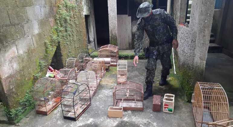 Homem foi preso por manter 121 pássaros silvestres em cativeiro e por maus-tratos
