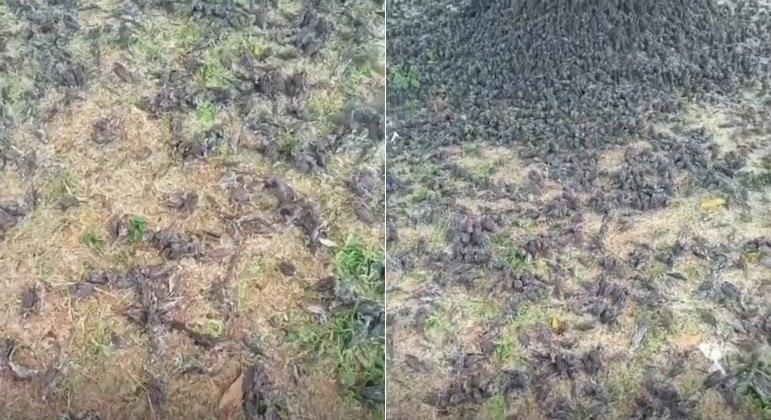 Centenas de pássaros caíram do céu em cemitério na ilha indonésia de Bali