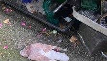 Homem acha pombos mortos no quintal e polícia investiga o mistério