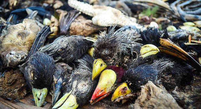 Deslocamento de espécies é um dos reflexos da poluição