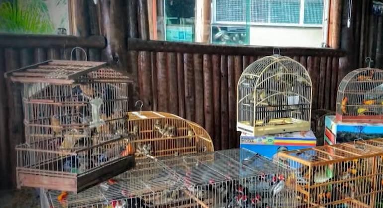 Diversos animais estavam feridos e aproximadamente 40 foram encontrados mortos