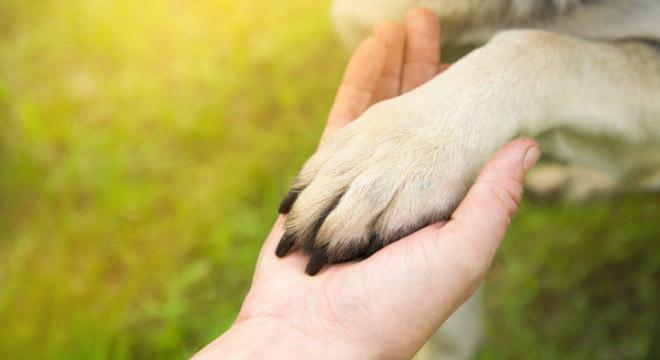 Cachorros são os parceiros animais mais antigos e próximos do homem