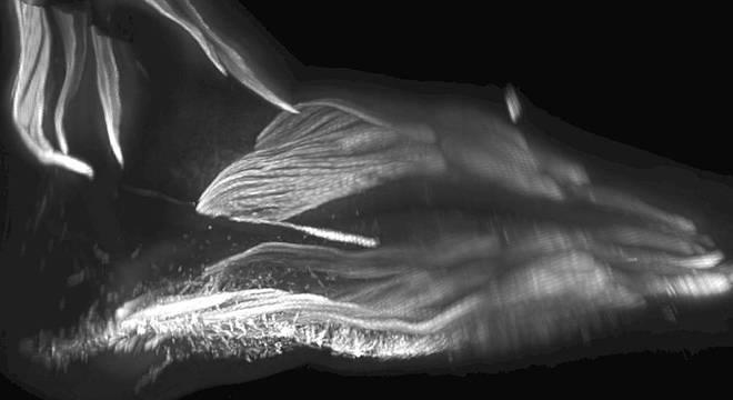 Músculos no pé de um bebê