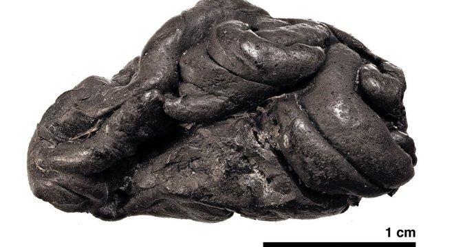 Pedaço de cola de bétula de 5.700 anos de Syltholm, sul da Dinamarca