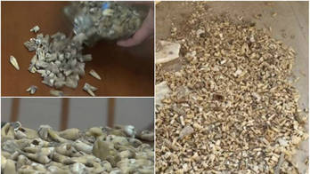 Pedreiros encontram 1000 dentes humanos escondidos em parede (Reprodução/Tatarstan24)