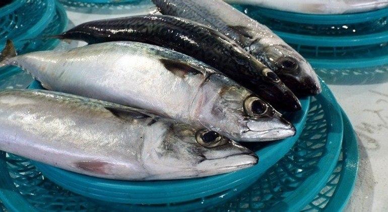 Consumo de peixes e crustáceos é principal suspeita de causa doença no Amazonas