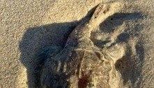 Peixe cabeçudo e com boca bizarra aparece morto em praia australiana