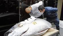 Atum raro de 200 kg é leiloado por mais de R$ 1 milhão no Japão