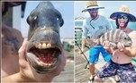 Um pescador dos Estados Unidos viralizou após fisgar um bizarrosargo-de-dentes. O peixe não é raro, mas bastante fotogênico, graças às fileiras de dentes, com aspecto estranhamente humano