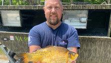 Peixes dourados gigantes pescados em rios assustam autoridades