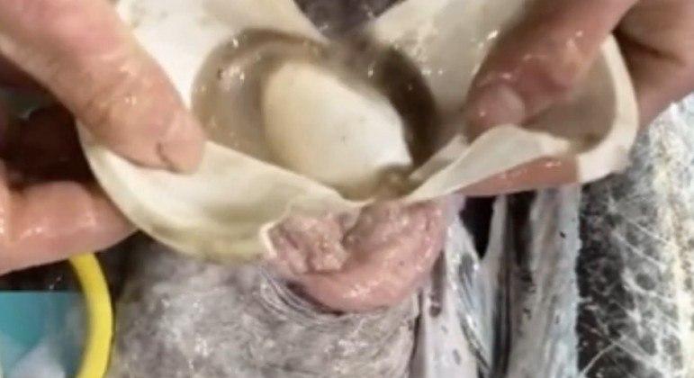 Peixeiro informou que achados do tipo no interior de criaturas marinhas são recorrentes