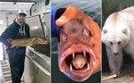 Estudante de biologia captura peixe com parasita no lugar da língua.Acasalamento entre ursos polares e pardos gera um híbrido estranho.Peixe escapa de captura 2.000 vezes em 20 anos e assusta especialistas.A seguir, as notícias mais bizarras e lidas doHORA 7na última semana!