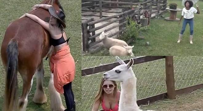 Peoas demonstram carinho com os animais de A Fazenda