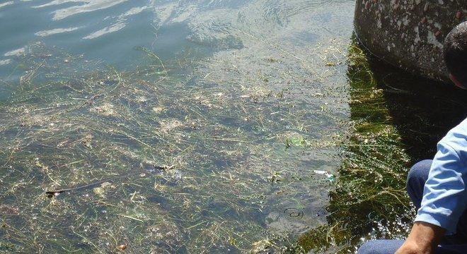 Pesca e navegação foram afetados com a quantidade de plantas no rio São Francisco