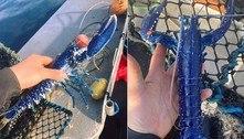 Pescador fisga rara lagosta azul e comemora: 'Uma em dois milhões'
