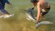 Pescadores pegam tubarão-branco nos braços apóscaptura acidental