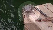 Pescador flagra inseto aquático parrudo e com picada potente