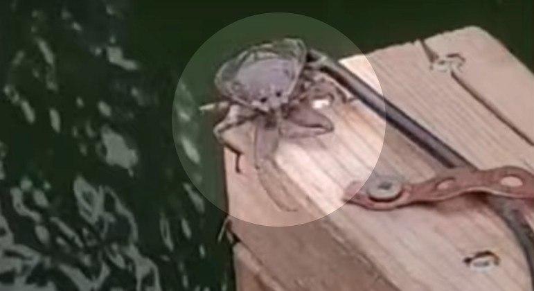 Inseto aquático parrudo foi flagrado sobre barco de pescador em Enderby, no Canadá
