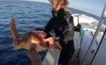 Foi aí que os homens da embarcação decidiram retirar a tartaruga da água até que o perigo passasse