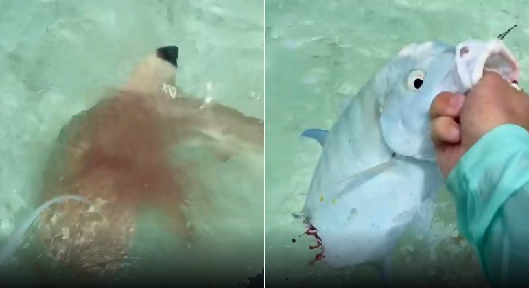 Pescador australiano teve que brigar com trio de tubarões para garantir o peixe