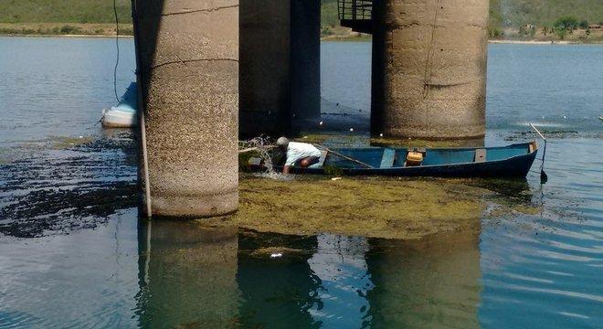 Pescadores da região foram chamados para retirar plantas do rio