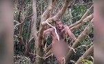 O resgate bizarro ocorreu no último domingo (3), no norte da Austrália. O homem estava agarrado em alguns galhos, faminto e com uma cara péssima